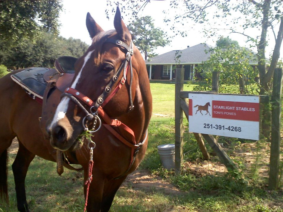 Starlight Stables Louisiana Flood Relief