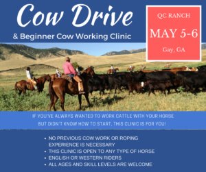 Cattle Drive Working Cow Clinic